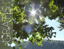 Läs mer om gratis guidade meditationer